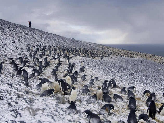 Penguins Offer Insight Into Climate Change