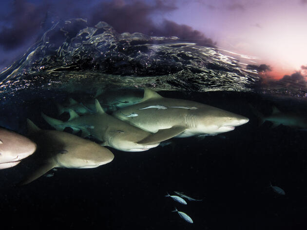 Safer Waters for Sharks