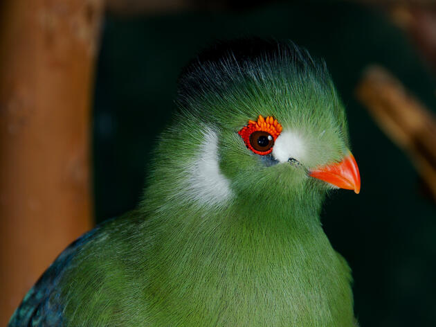 8 Green Birds From Around the World
