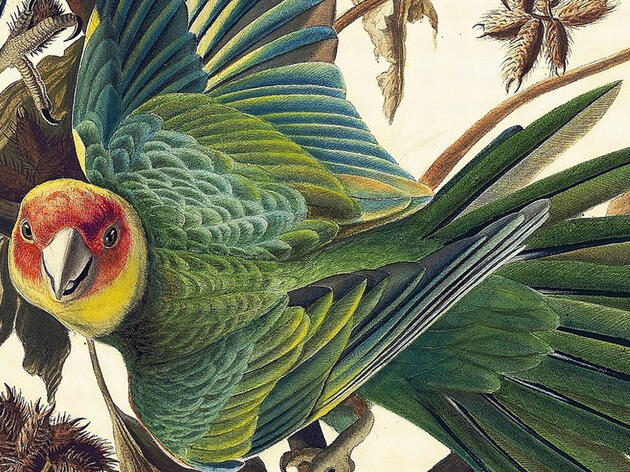 Win a Copy of the Gorgeous Book 'Audubon's Aviary'