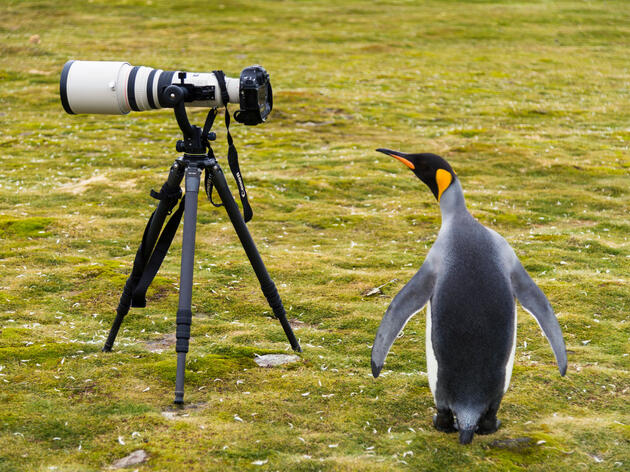 How to Use Lighting and Angles to Take Better Bird Photos