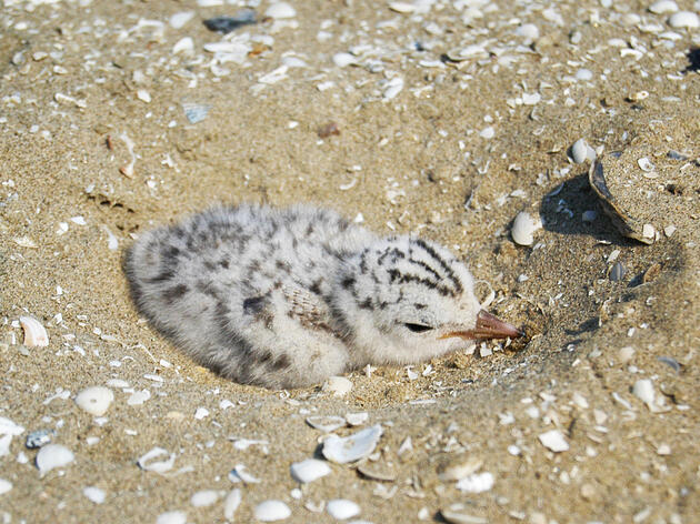 Why Louisiana's Barrier Islands Are Essential to Seabird and Human Survival