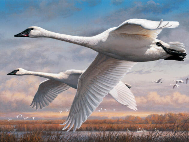 What It's Like to Judge the Duck Stamp Contest