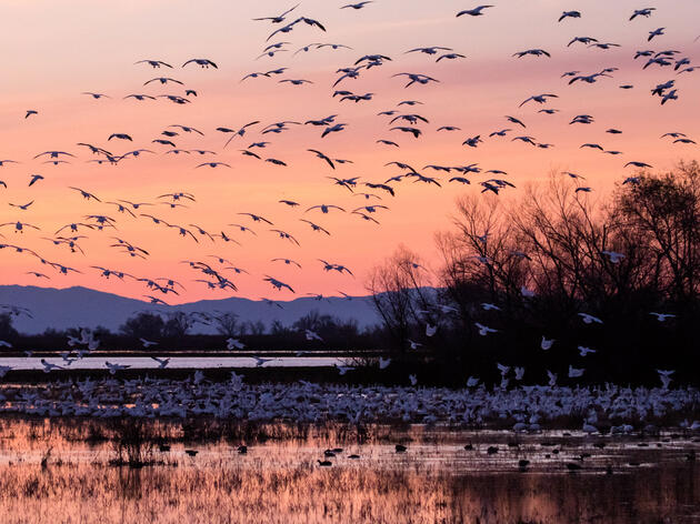 How Do Birds Spend Cold Winter Nights?