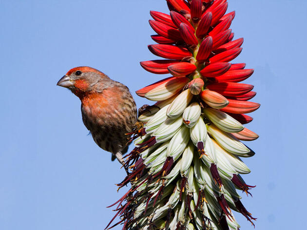 What One Success Story Reveals About Talking to Politicians on Birds and Climate