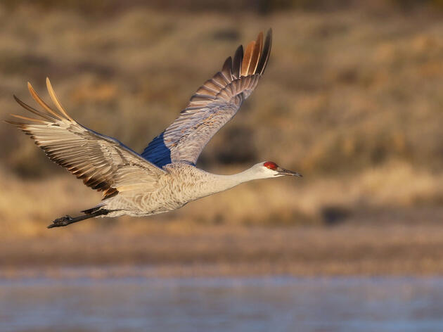 Audubon Joins New Mexico Municipalities in Water Releases to Recharge Vital Habitat Along the Rio Grande