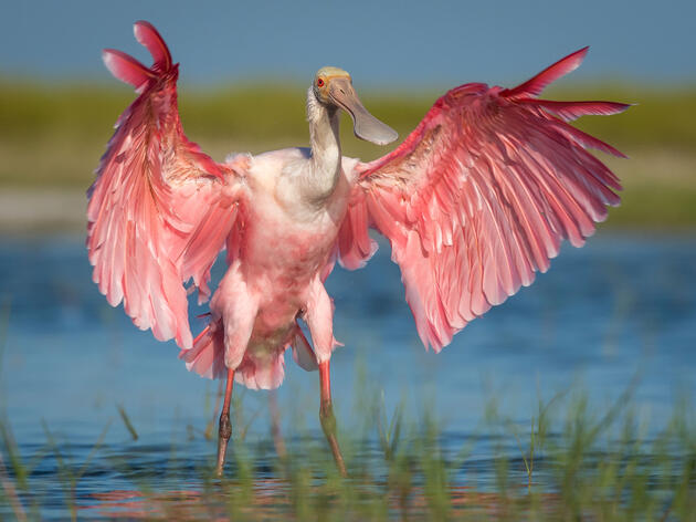 Are You As Tall As a Wading Bird?