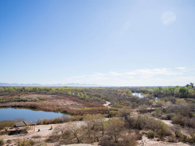 Native Plants Help Restore the Colorado River