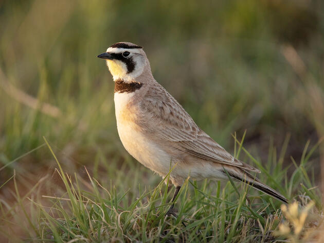Top Audubon Wins for Birds in 2019