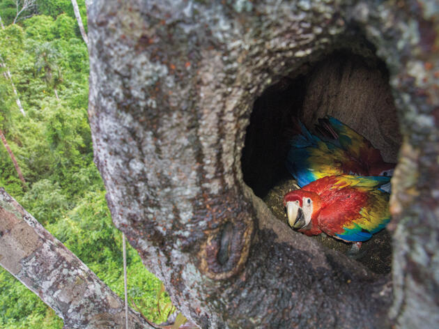 Meet the Brave Bodyguards Protecting Belize's Scarlet Macaws From Poachers
