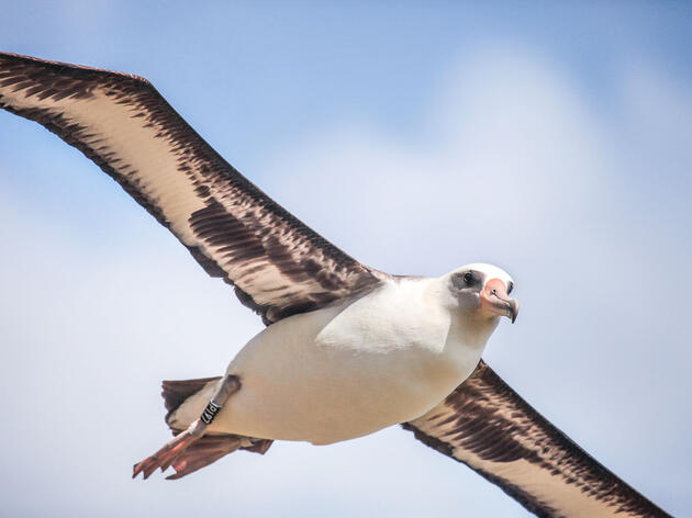 On the Ground With the U.S. Navy's Albatross Adoption Agency