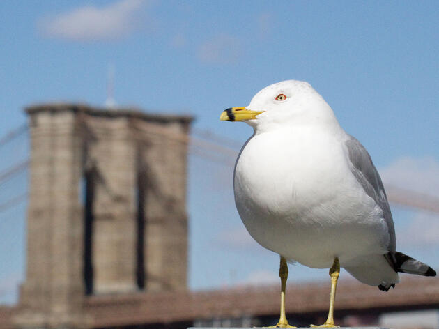 Under the Bridge: Seven Fun Species You Can Find While Birding in Brooklyn