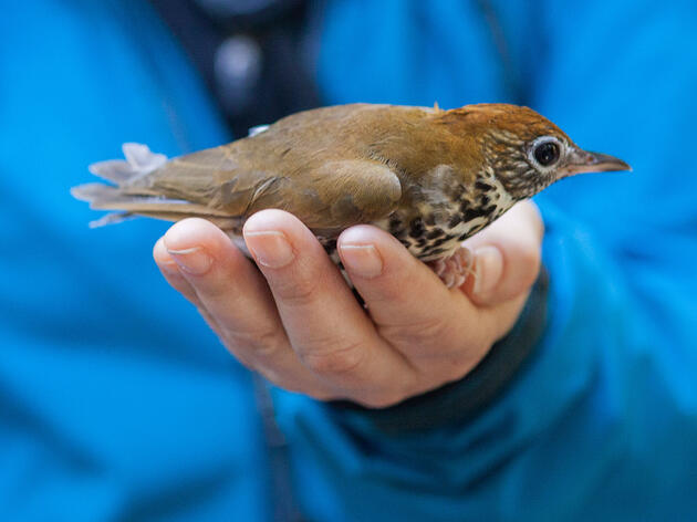 Can A Little Bird's Big-Screen Debut Help Tackle Climate Change?