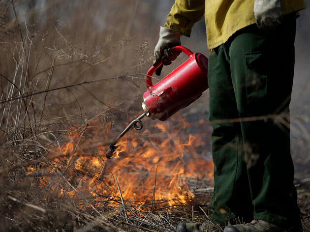 In Chicago, Controlled Fires Are Helping to Restore Crucial Bird Habitat
