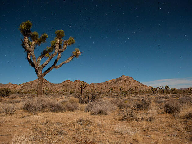 Three Crucial Desert Regions in California Gain Monument Status