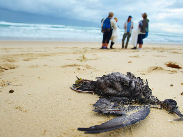 Why Do Some Seabirds Eat So Much Plastic? It Smells Like Food.