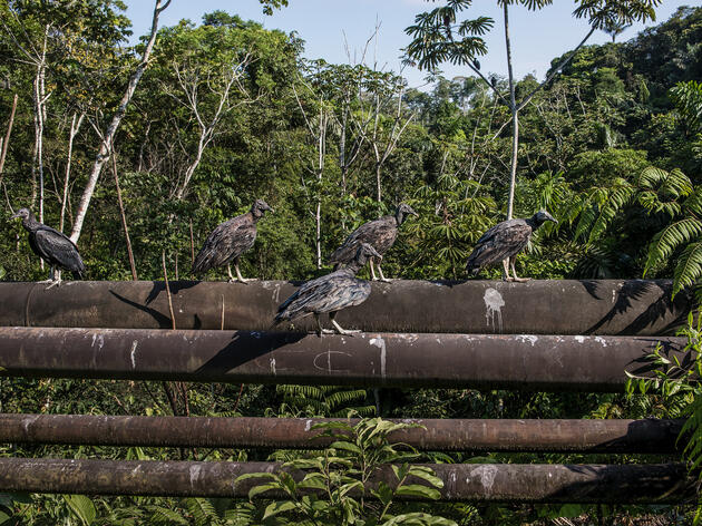 As Oil Companies Dig Into Yasuní National Park, Ecuadorians Are Fighting Back