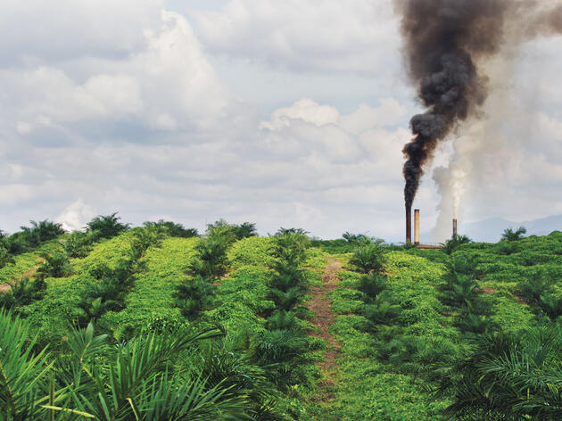 As the Global Demand for Palm Oil Surges, Indonesia's Rainforests Are Being Destroyed
