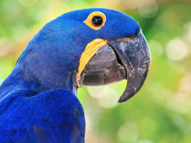 Parrots Among Most-Threatened Bird Groups
