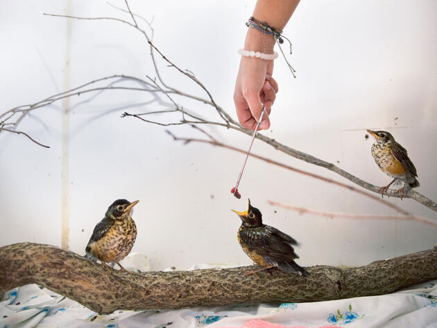 Behind the Scenes at Connecticut's Biggest Baby Bird Nursery