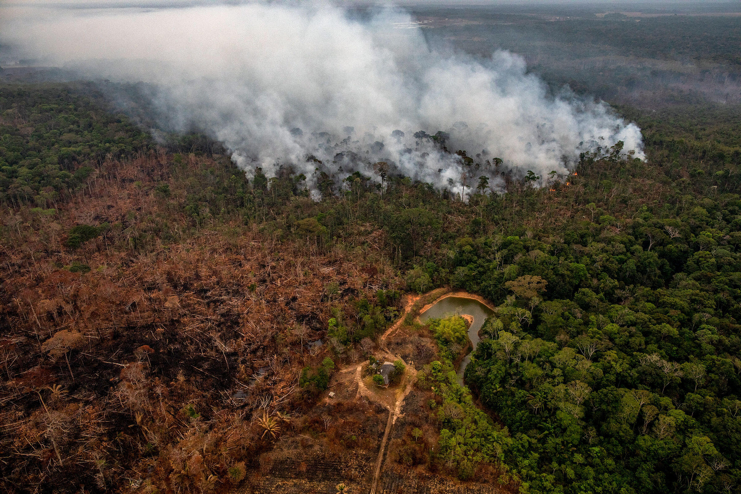The Amazon's Blazing Fires Are Squeezing Habitat for