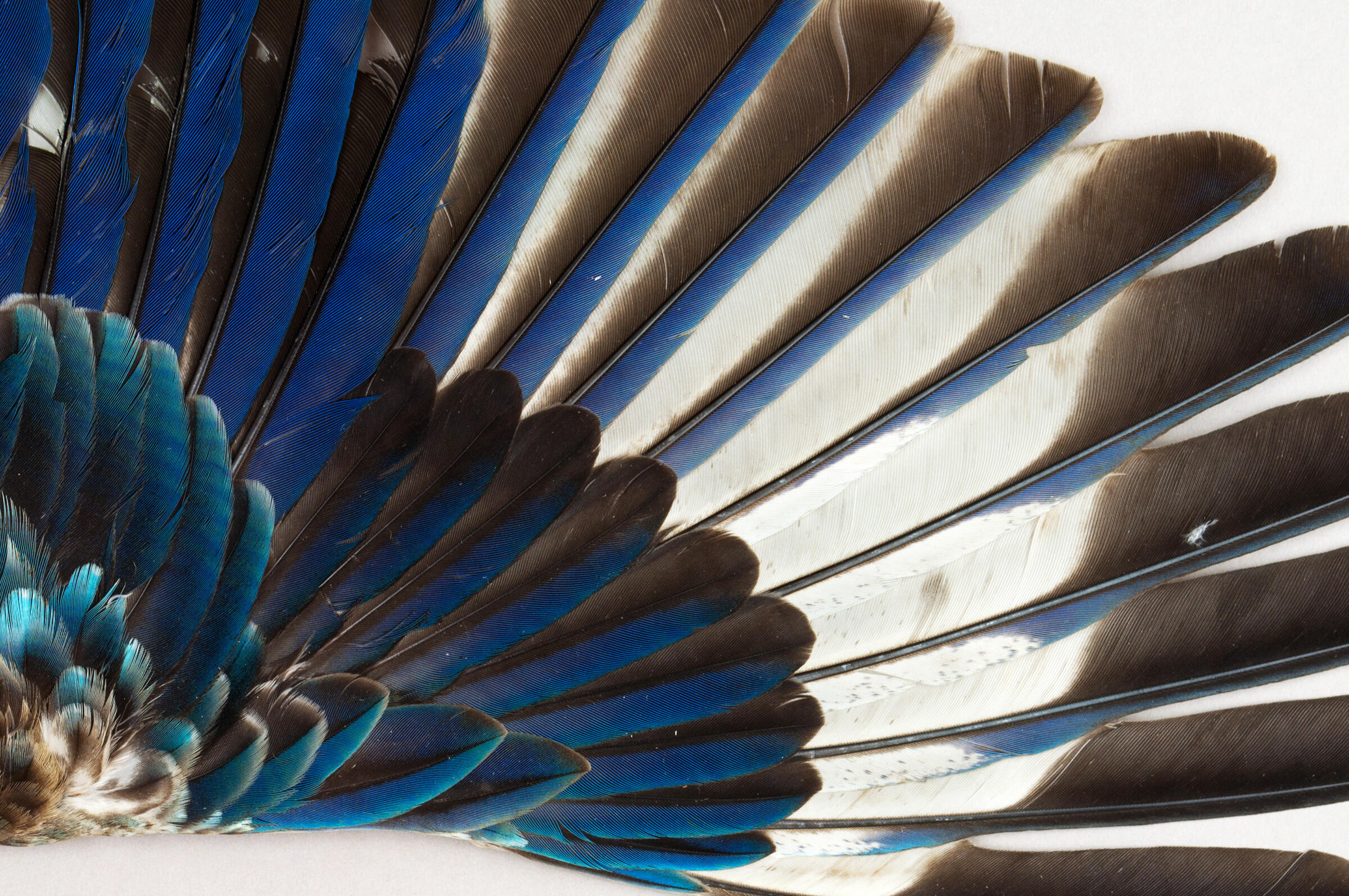 behind the scenes of the world�s largest bird wing