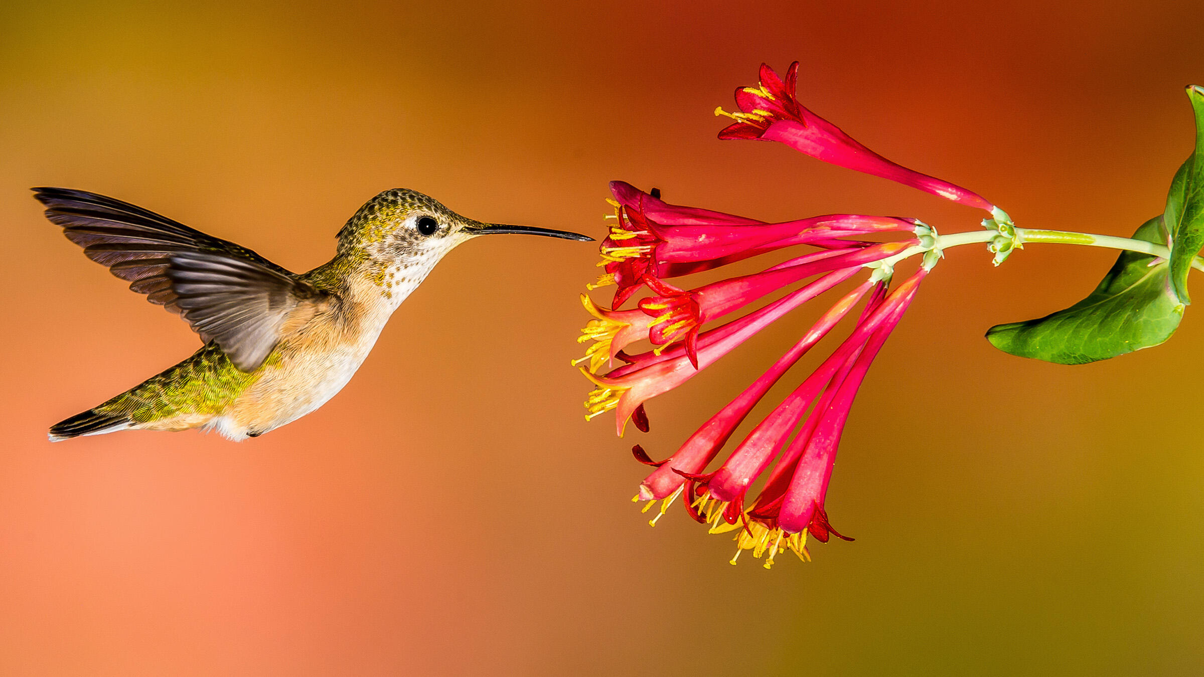 How to Create a Hummingbird-Friendly Yard | Audubon