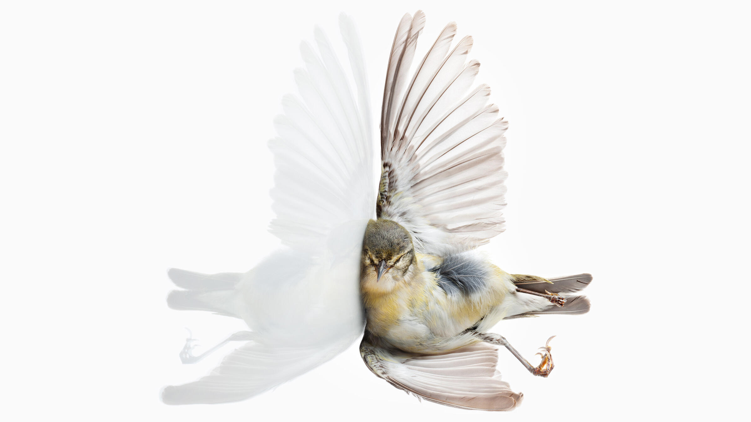 Bird Vs Building Portraits Of Flight Gone Wrong Audubon