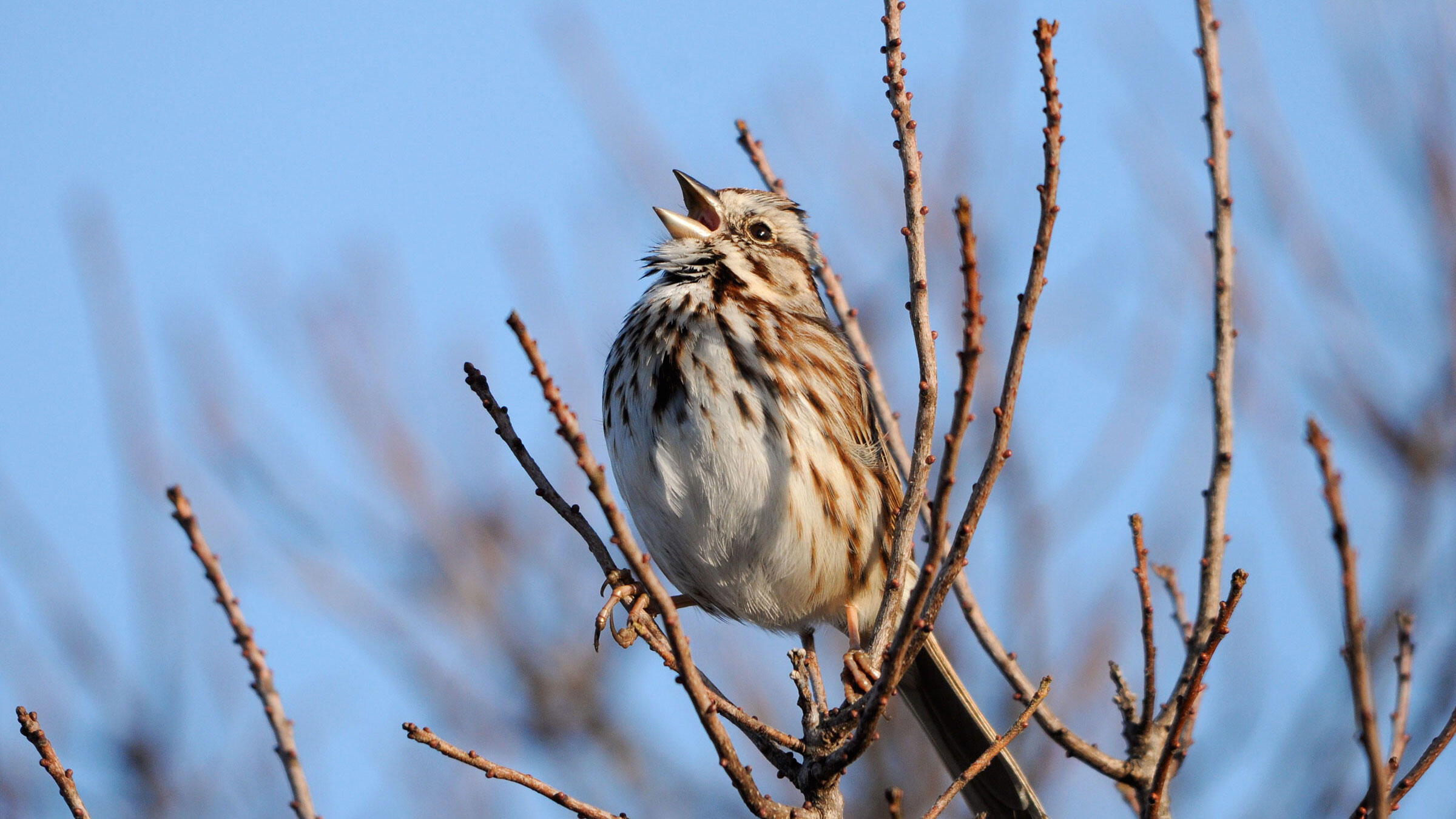 A Beginner's Guide to Common Bird Sounds and What They Mean | Audubon