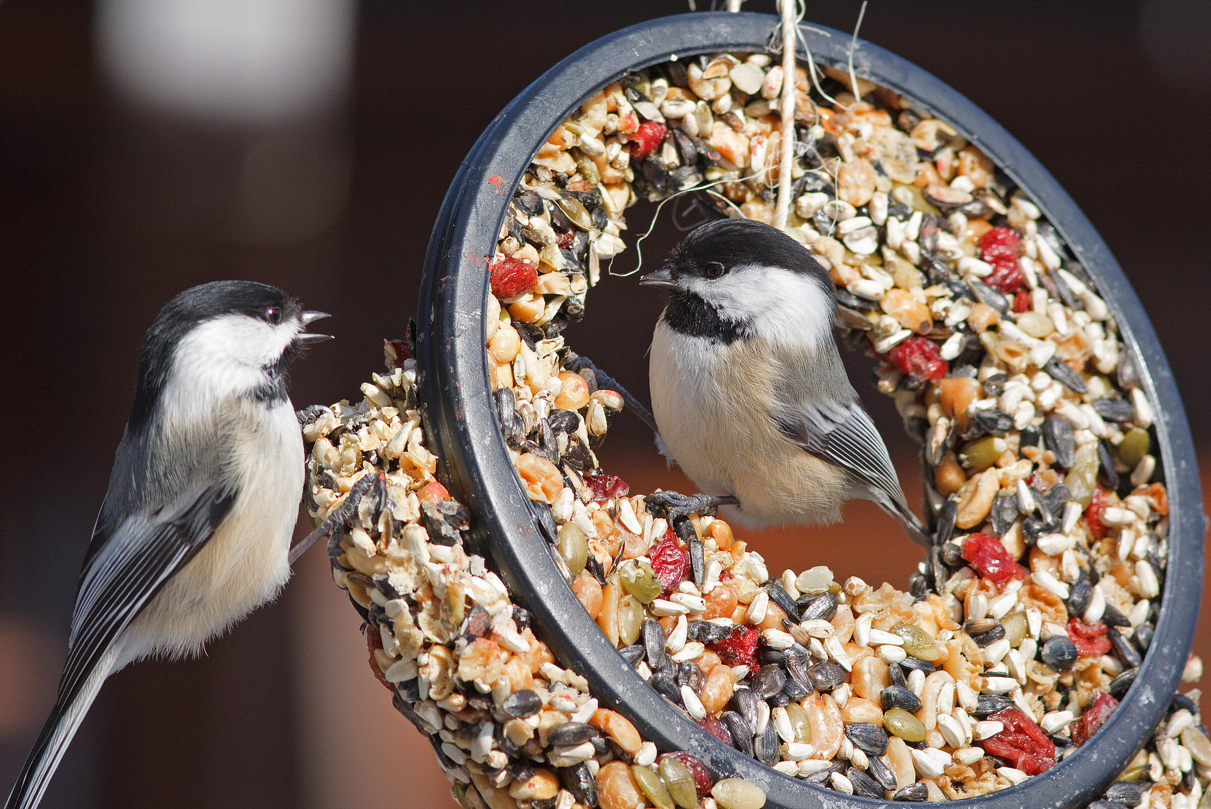 How To Get Rid Of Birds In Backyard to feed, or not to feed | audubon
