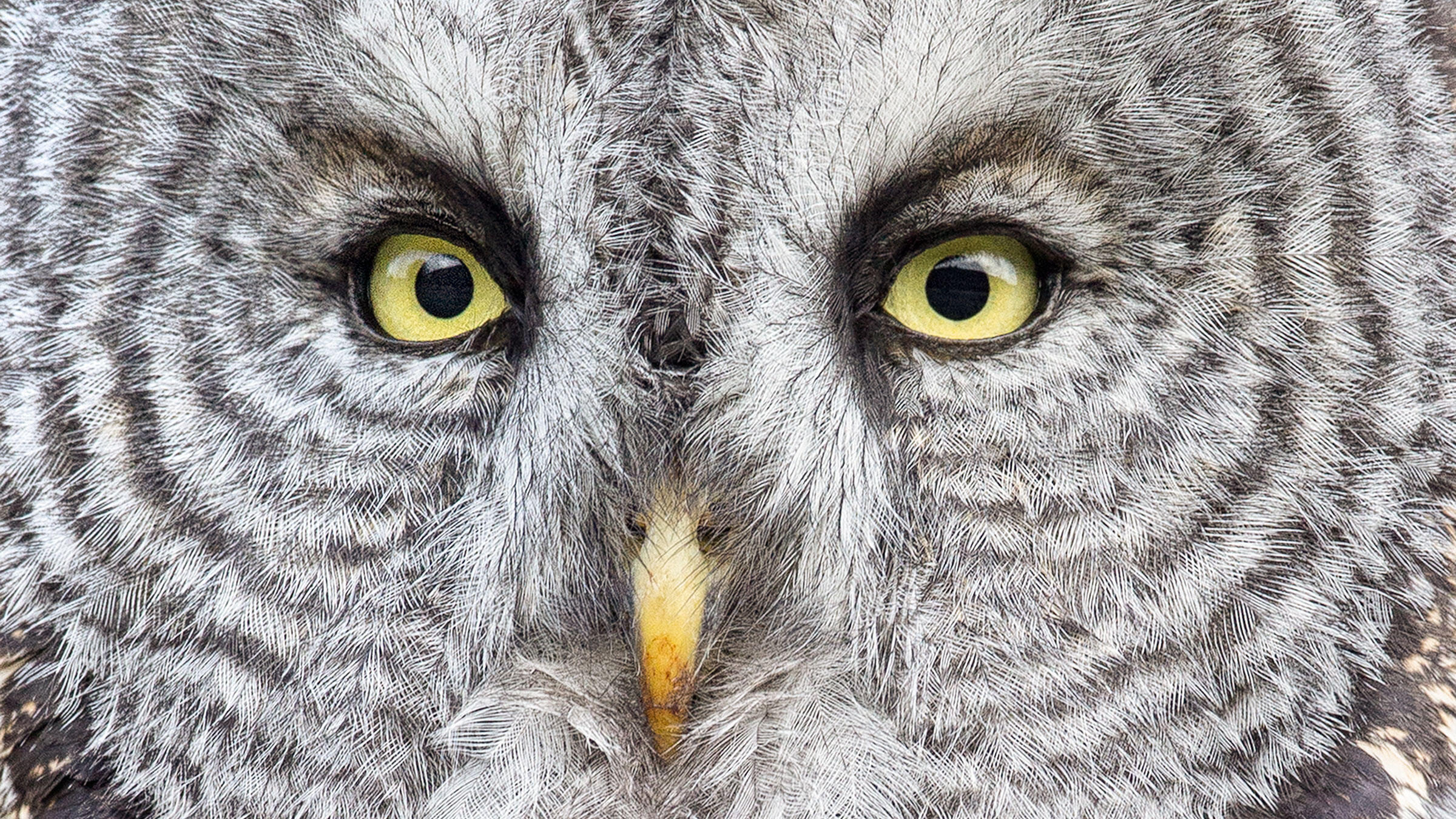 Night Owls May Face Special Challenges >> After 100 Years Scientists Are Finally Starting To Understand The