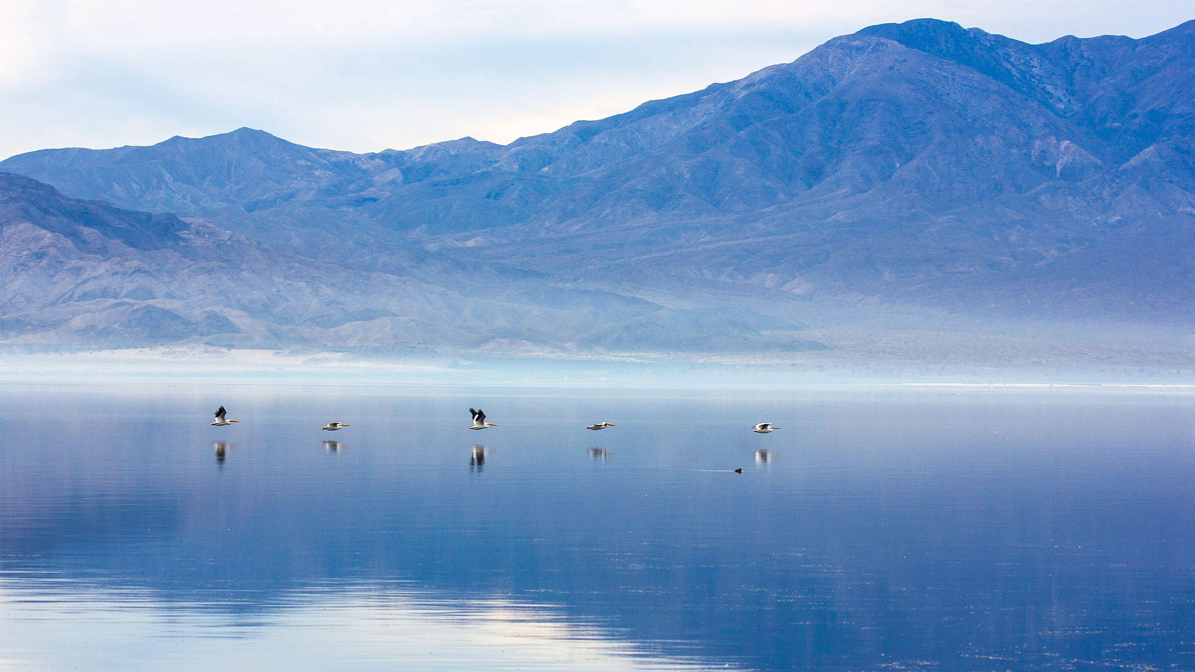 Executive Summary—Water and Birds in the Arid West: Habitats