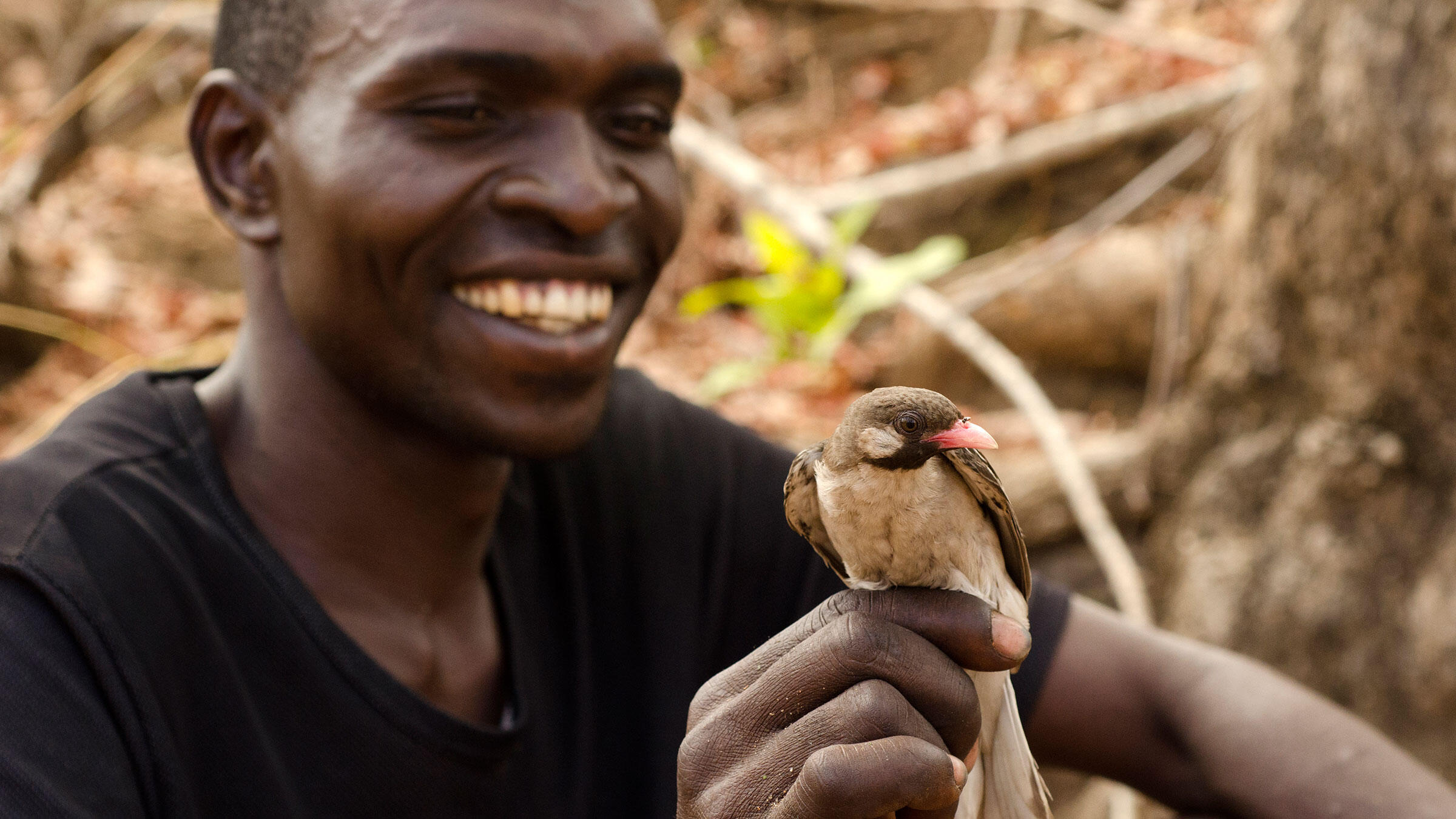 Meet The Greater Honeyguide The Bird That Understands Humans Audubon