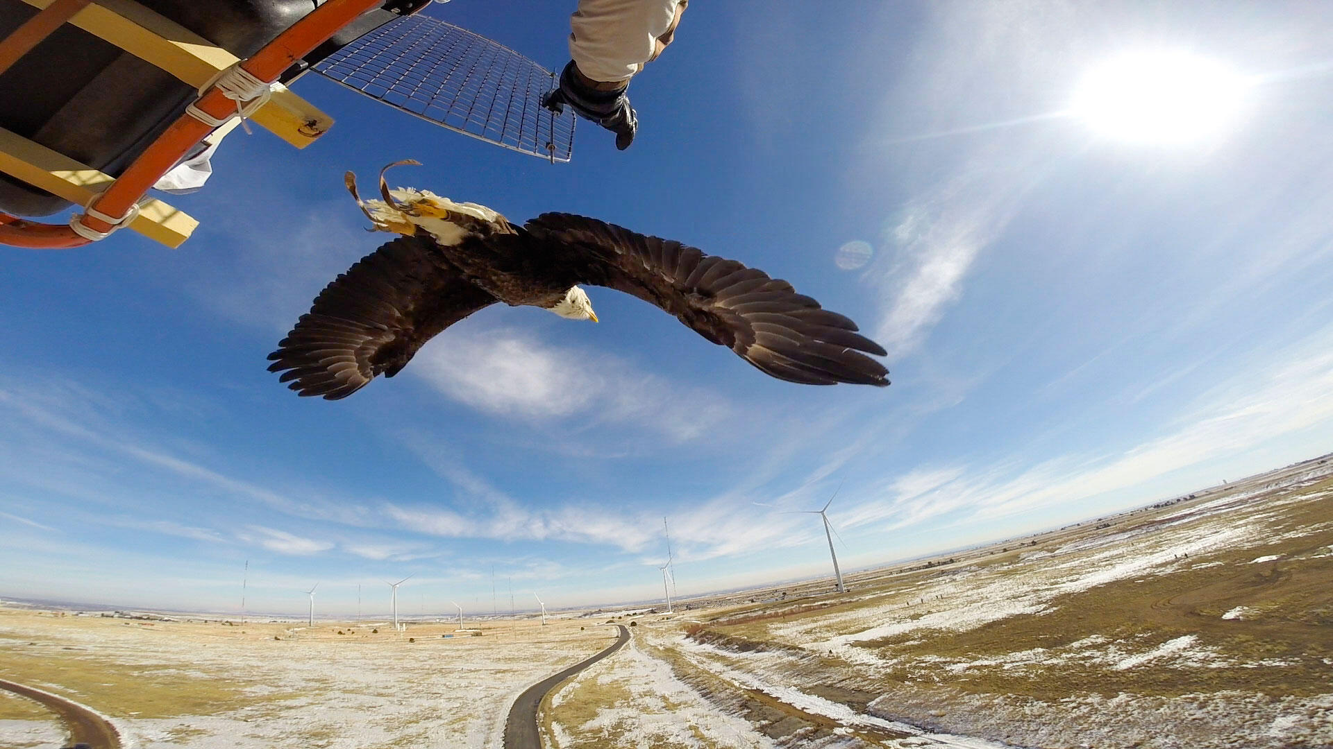 Will Wind Turbines Ever Be Safe For Birds Audubon
