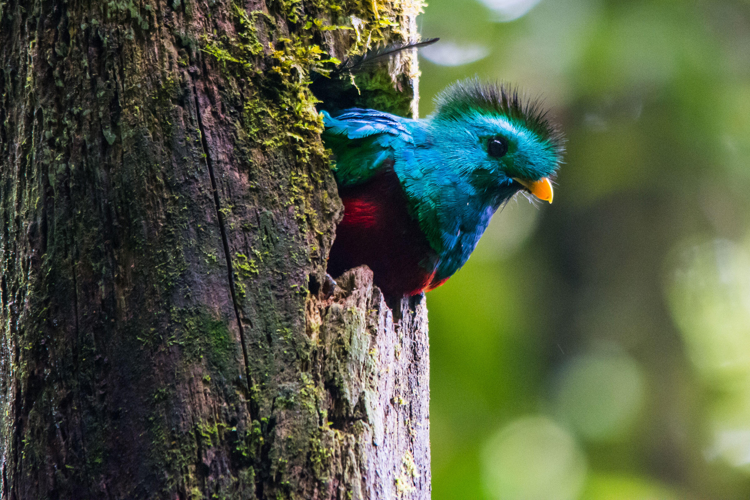 ecotourism in south american countries essay Welcome welcome to eco tourism america the largest eco portal devoted to promoting all kinds of nature based travel in the americas.
