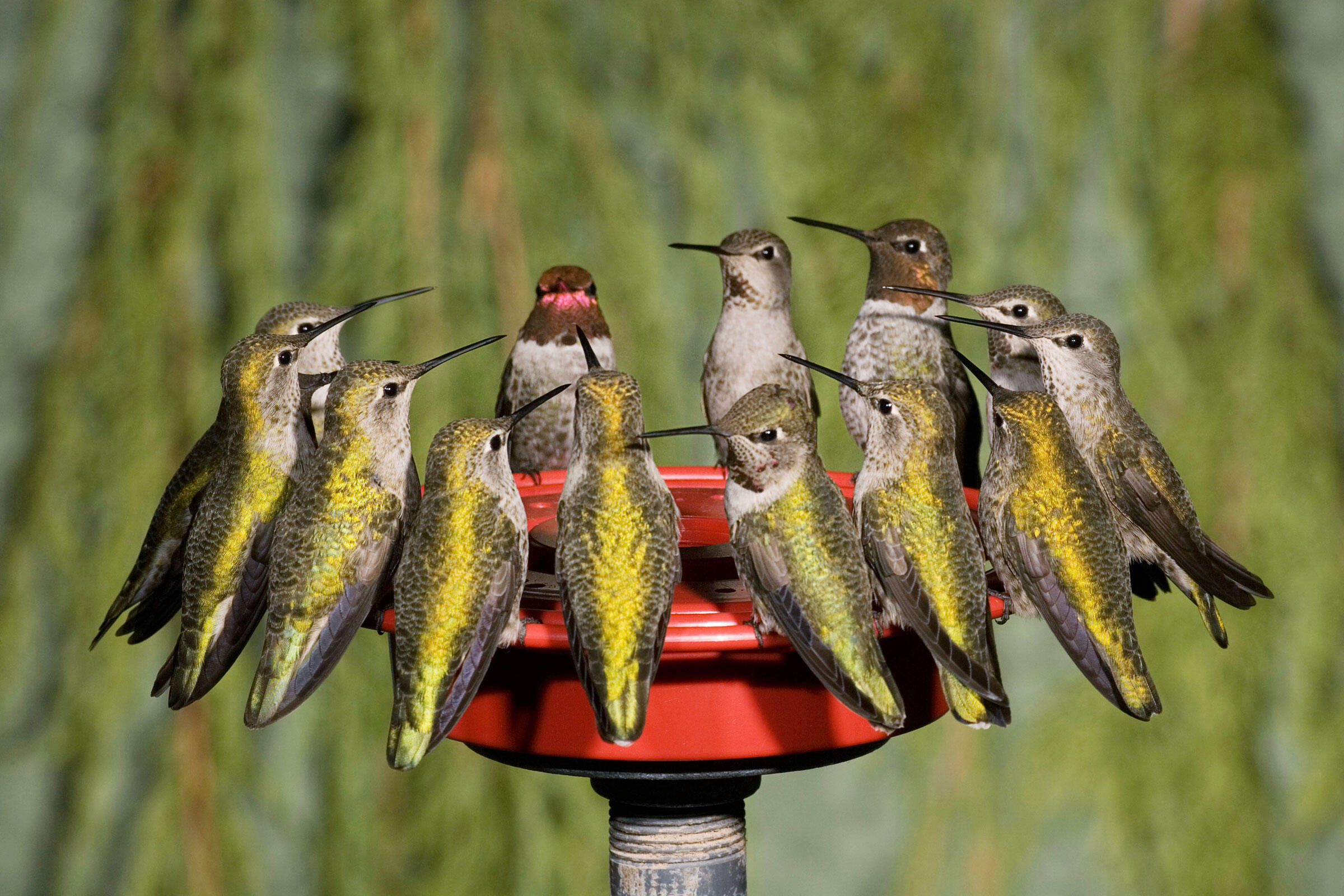 Hummingbirds In Your Yard This Spring