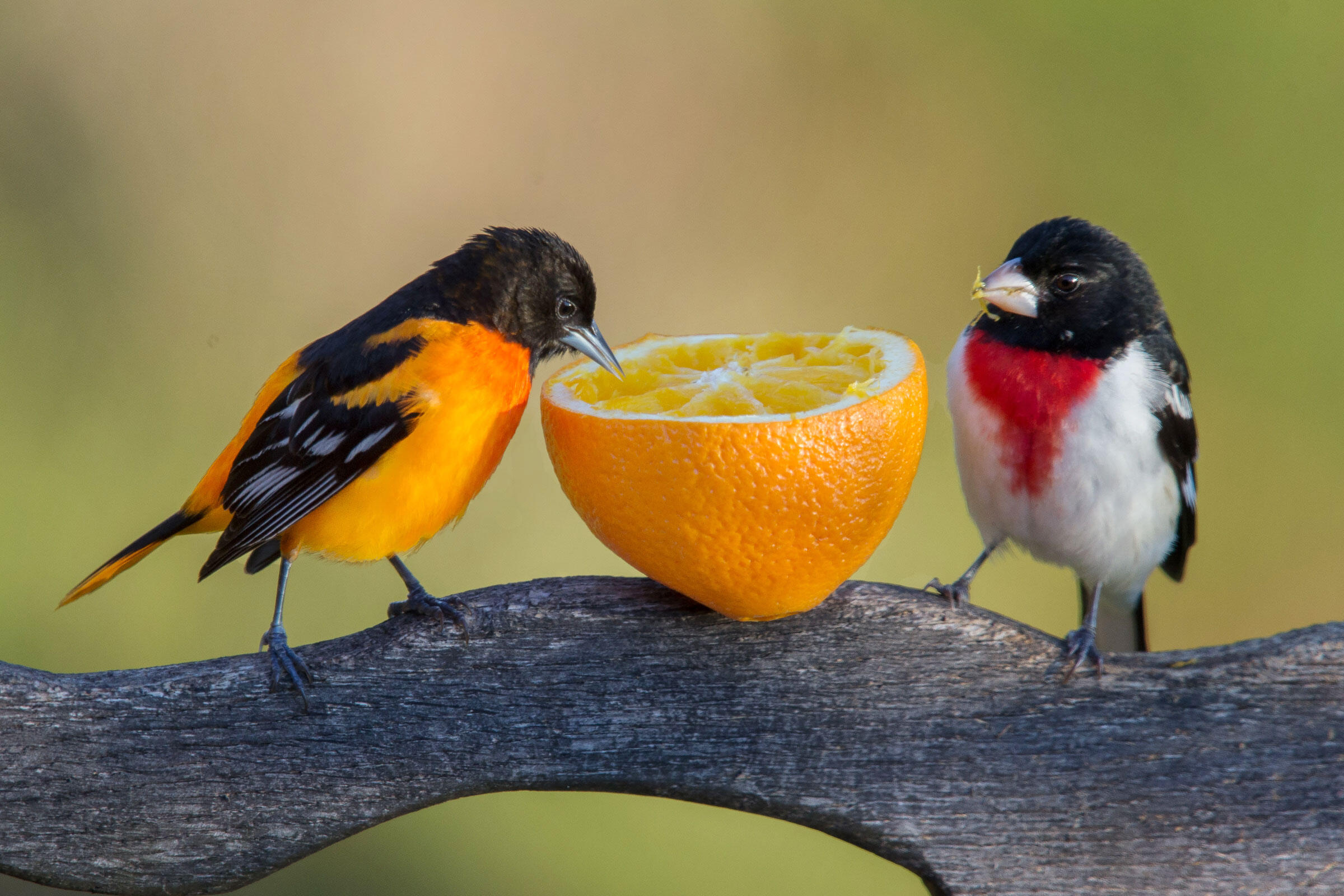 When It's Okay (or Not) to Feed Birds | Audubon