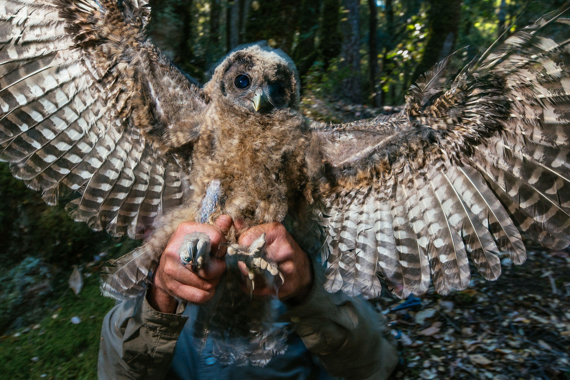 Use Your Photography to Support and Advance Conservation | Audubon