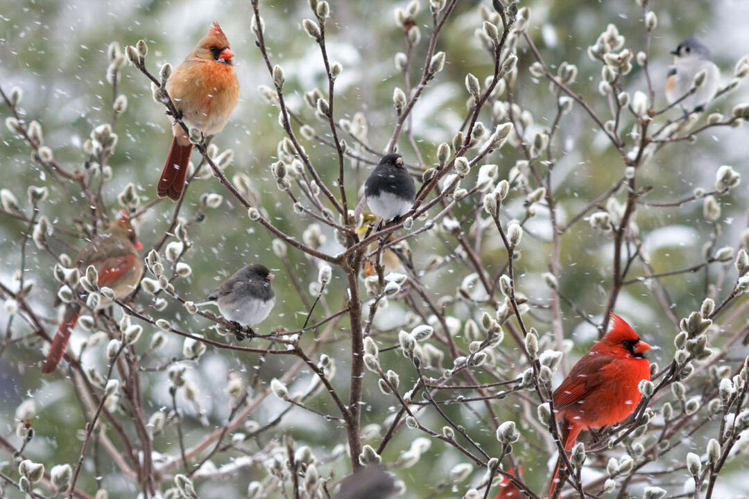 It's Almost Time for the Great Backyard Bird Count | Audubon