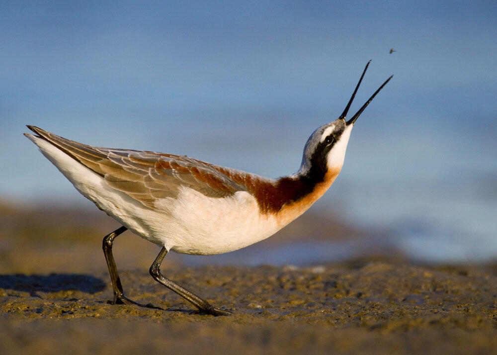 Frequently Asked Questions: Water and Birds in the Arid West