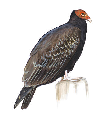 Birds Audubon Pennsylvania