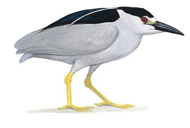 Audubon Monitors Contamination at Little Calumet River as Shorebird Migration Begins