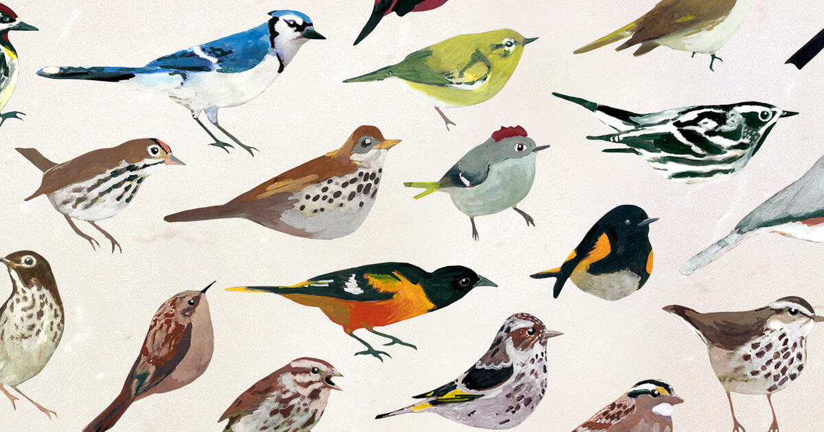 Wake up to Gentle Birdsong with This New Smartphone App