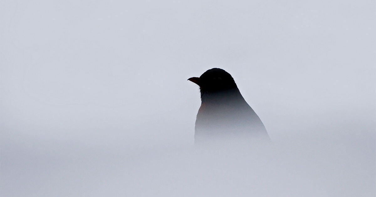 Can You Identify the Birds Behind These Creepy Calls? | Audubon