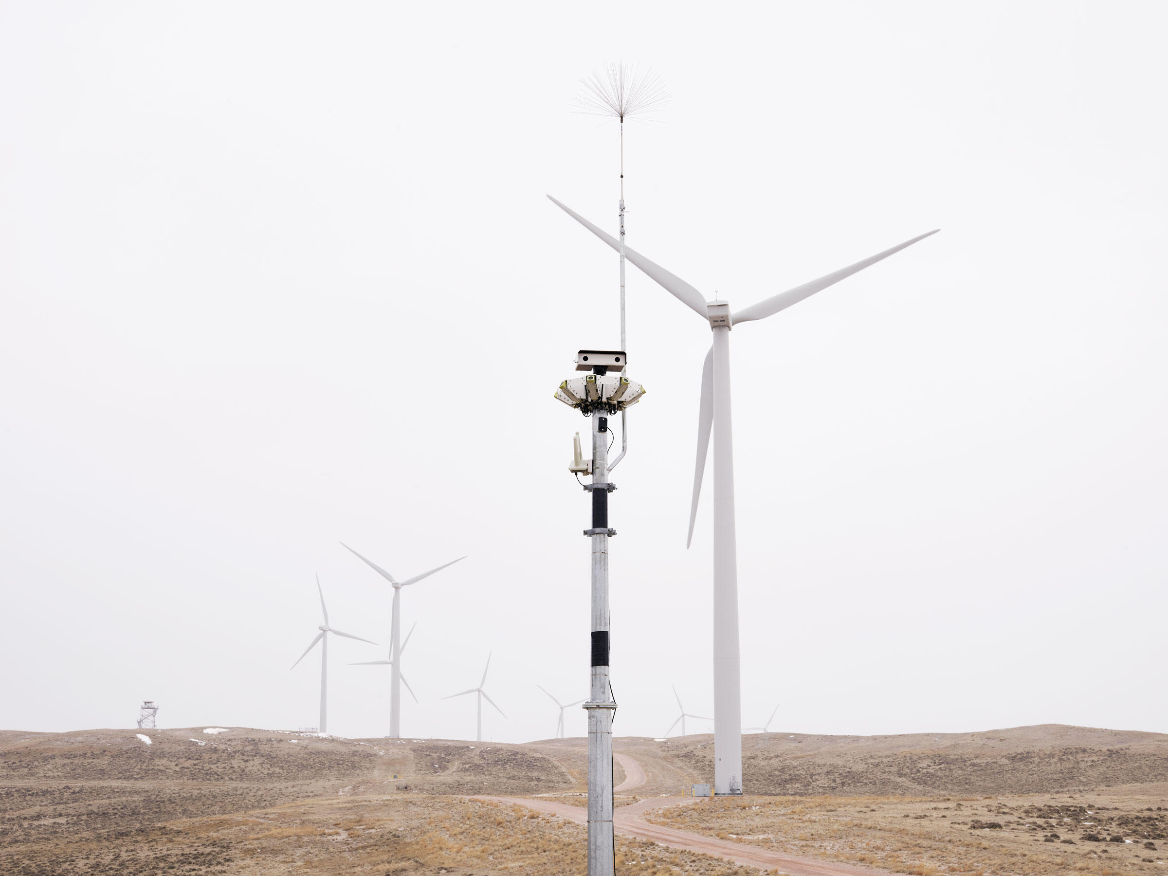 How New Technology Is Making Wind Farms Safer for Birds