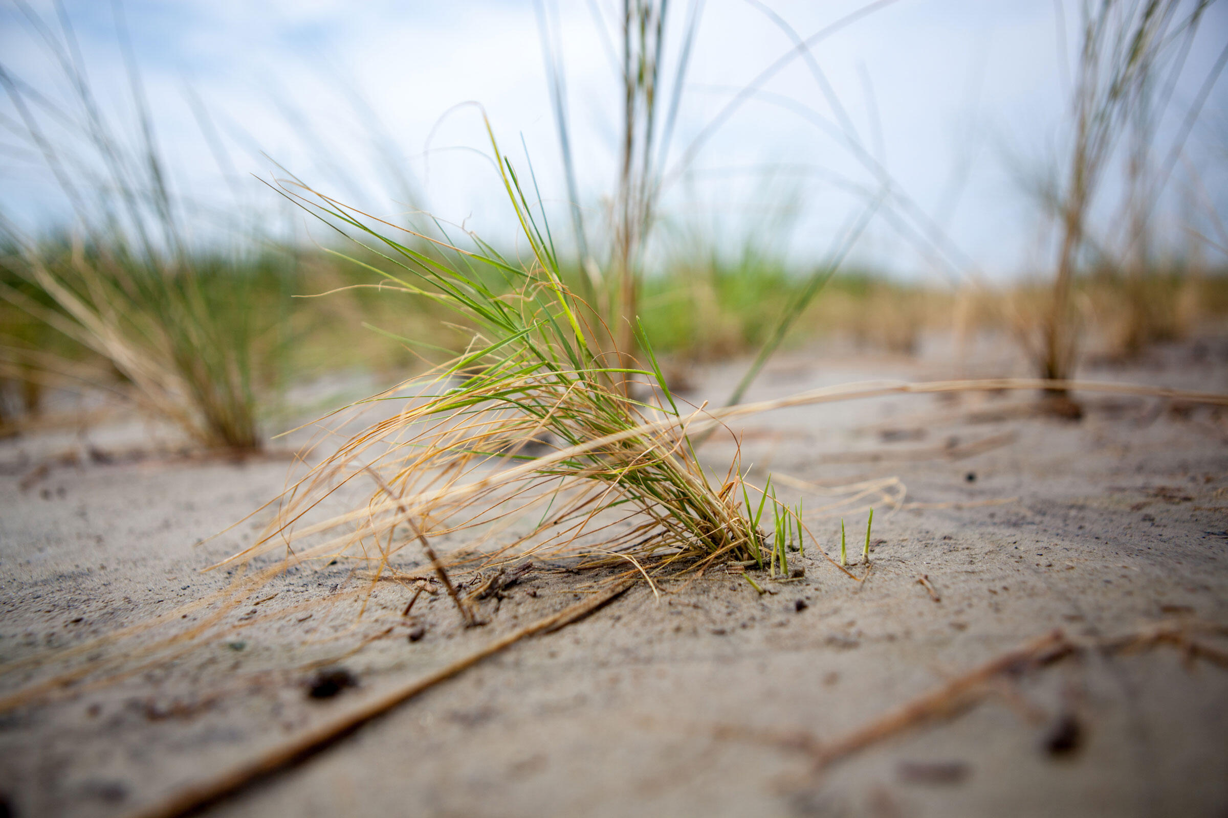 The Ambitious Plan to Save Chesapeake Bay's Shrinking Saltmarshes