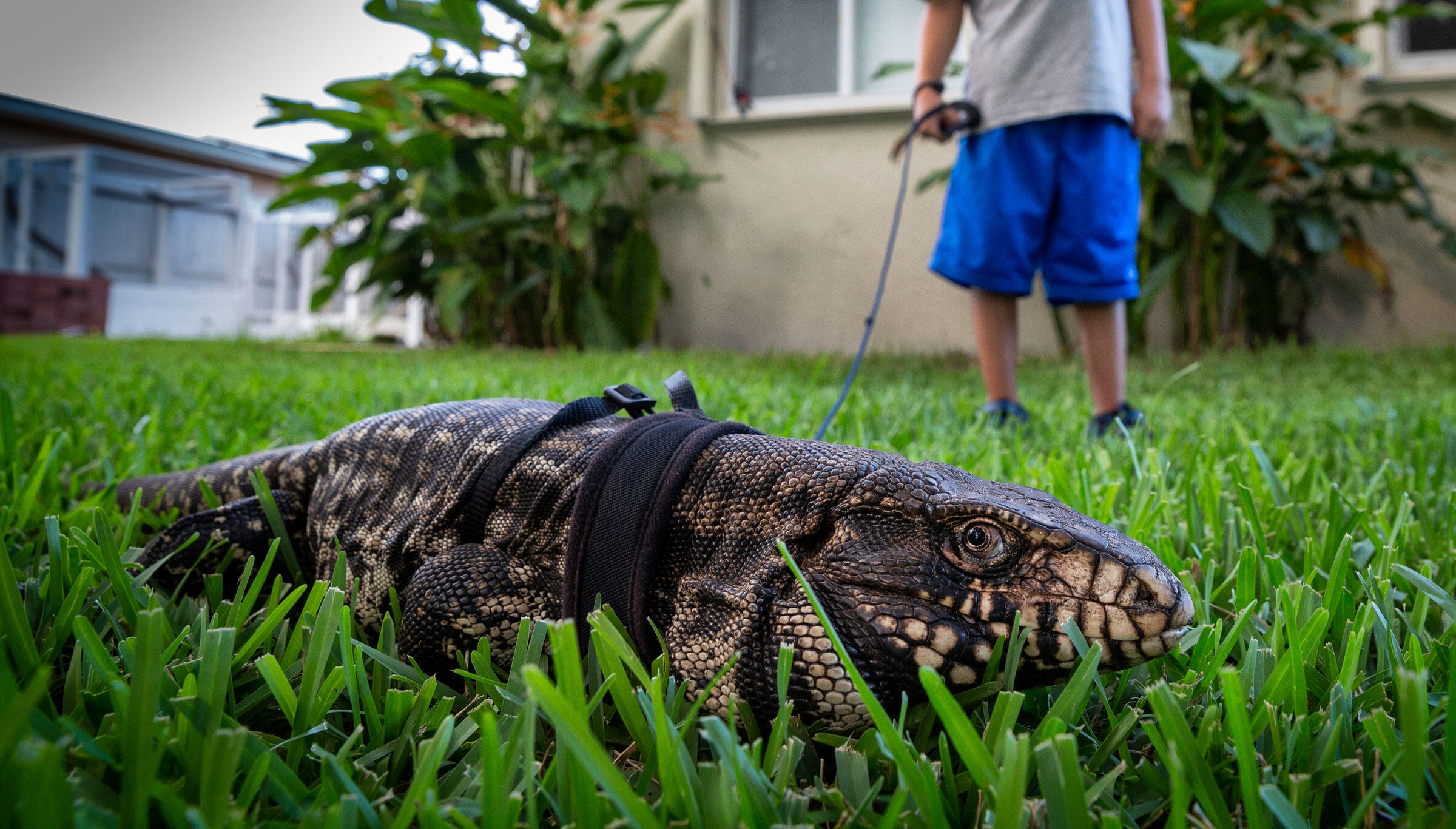How To Catch A Lizard In Your Backyard - House of Things ...